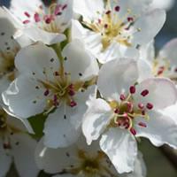 bloem, herstel van burn-out