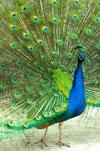 Mindfulness-individueel - pauw
